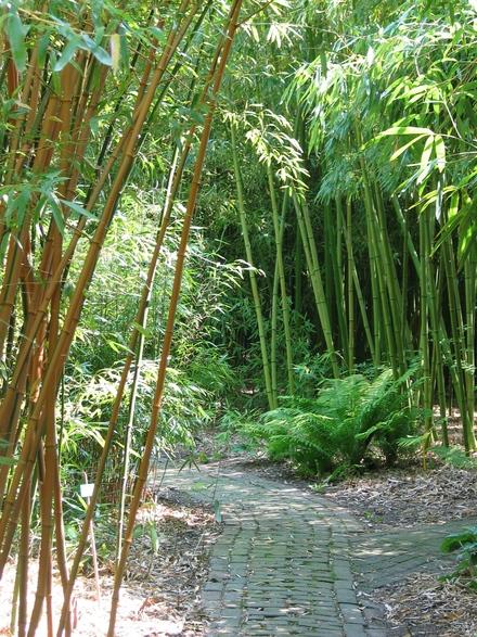 bamboeplanten verkoop bamboe informatie centrum nederland. Black Bedroom Furniture Sets. Home Design Ideas