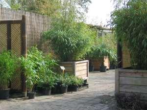 Bamboes en de sfeer die ze cre ren bamboe informatie centrum nederland - Bamboe in bakken terras ...